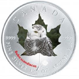 1 Unze Silber Maple Leaf 2015 Schnee Eule Kanada Wildlife