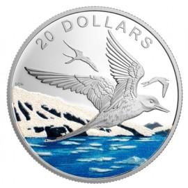 1 Unze Silber 20 Dollar Silber Proof Funkelnder Norden Küstenseeschwalbe Kanada 2017  Glistening North