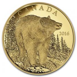 350 Dollar Gold Schwarzbär Wildtiere Canada  2016 PP
