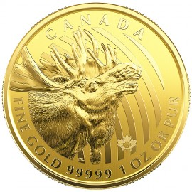 1 oz Call of the Wild 2019 Gold  Elch